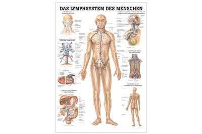 Lehrtafel Das Lymphsystem des Menschen