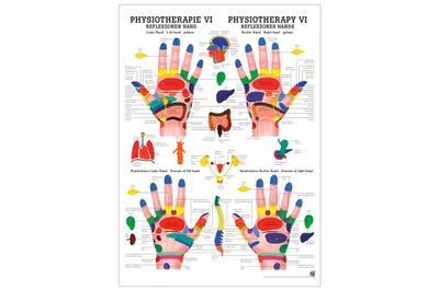 Lehrposter Reflexzonen Hand